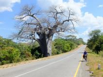 Baobab Zambia